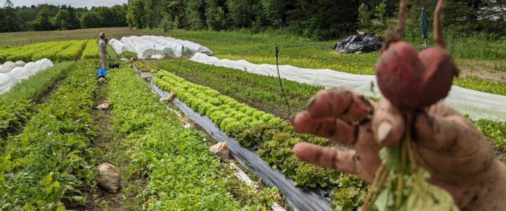 Bilan des activités de juillet pour Des Chenaux récolte
