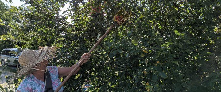 Des pommes à Ste Geneviève de Batiscan