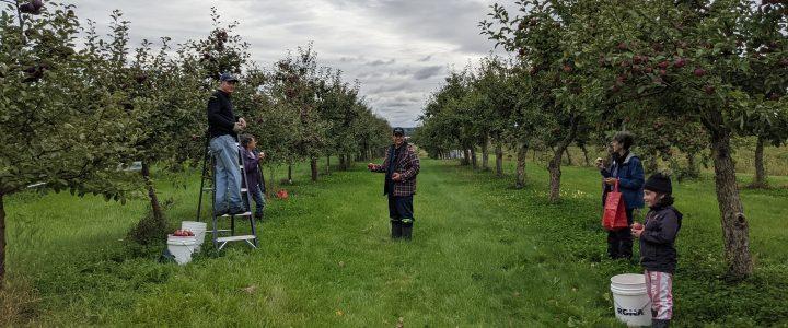 Festival de la pomme